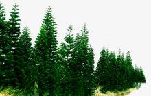 Sprijin financiar pentru plantații forestiere!